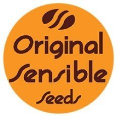 Original Sensible Seeds Auto