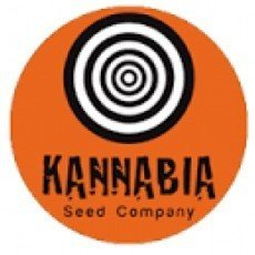 Kannabia Regular