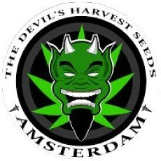 Devil's Harvest Seeds Regular