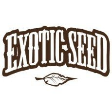 Exotic Seeds Regular