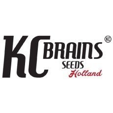 KC Brains Holland Regular
