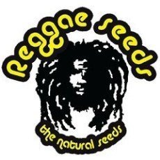 Reggae Seeds Regular