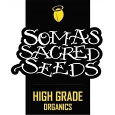 Soma Seeds Regular