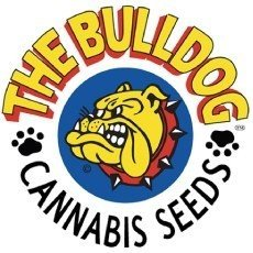 The Bulldog Seeds Regular
