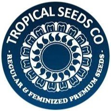 Tropical Seeds Regular
