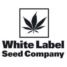 White Label by Sensi Seeds Regular