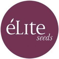 Elite Seeds CBD
