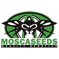 Mosca Seeds Regular
