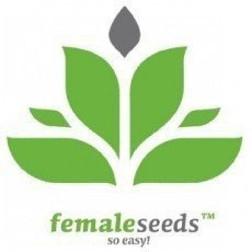 Female Seeds CBD