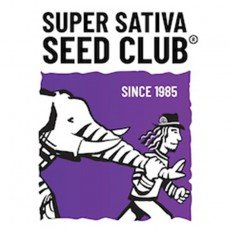 Super Sativa Seed Club Regular