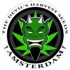 Devil's Harvest Seeds CBD