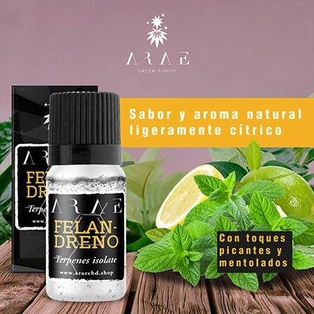 A-Felandreno ARAE sabor y aroma