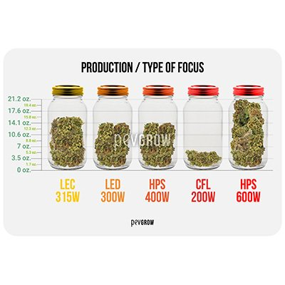 Production per type of growing focus