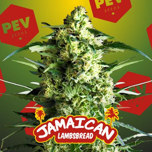Jamaican Lamsbread PEV Bank Seeds