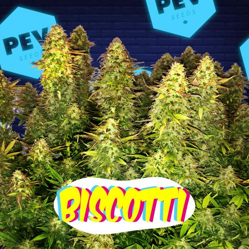 Biscotti PEV Bank Seeds