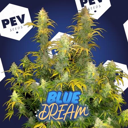 Graines Blue Dream PEV Bank