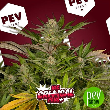 Critical Plus PEV Bank Seeds