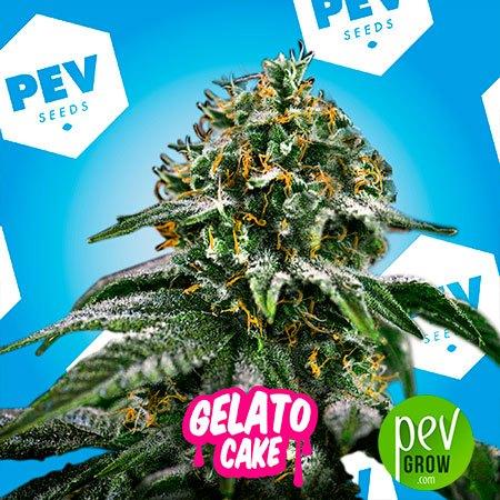 Gelato Cake PEV Bank Seeds