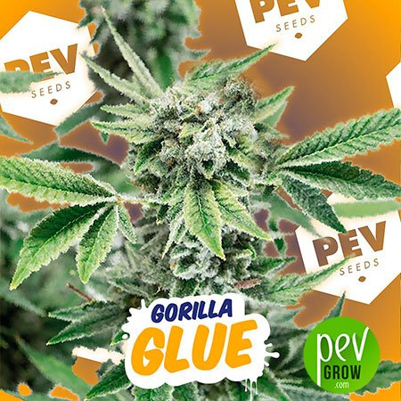 Gorilla Glue PEV Bank Seeds
