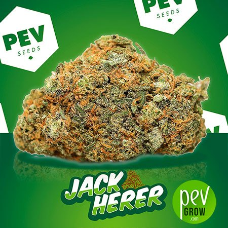 Jack Herer PEV Bank Seeds