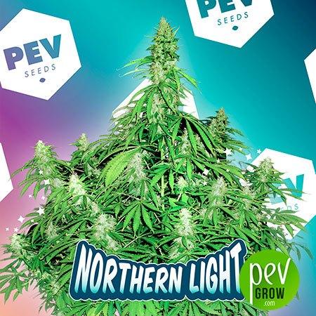 Northern Light PEV Bank Seeds