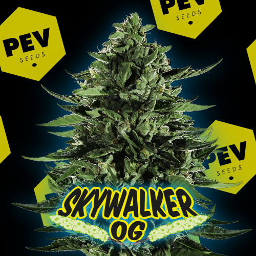 Skywalker OG PEV Bank Seeds