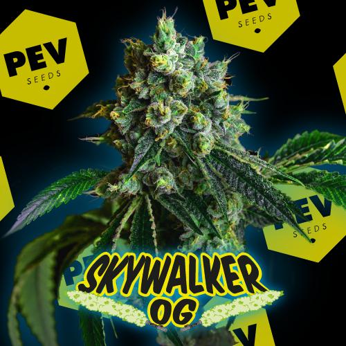 Skywalker OG PEV Bank Seeds