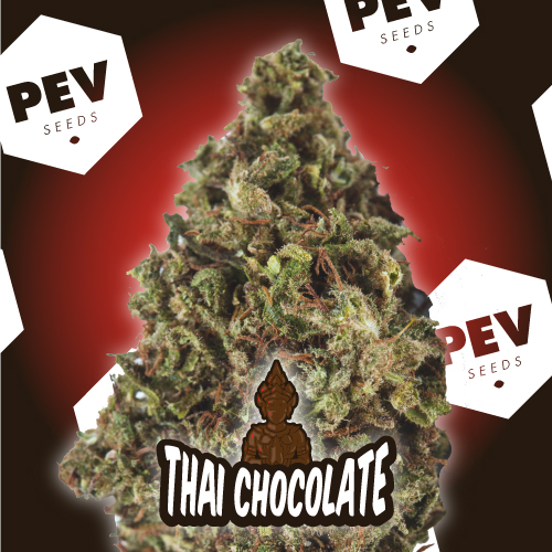 Thay Chocolate PEV Bank Seeds