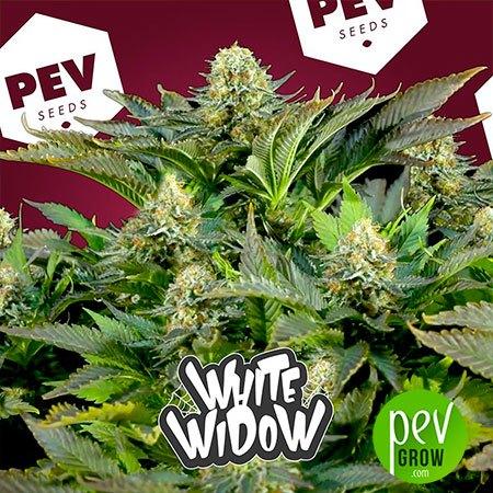 White Widow PEV Bank Seeds